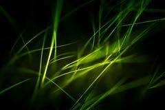 Abstrakt makro av päls i gröna signaler Royaltyfria Foton