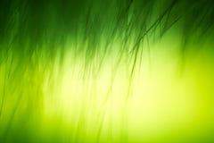 Abstrakt makro av päls i gröna signaler Royaltyfri Bild