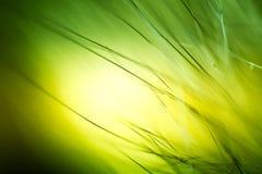 Abstrakt makro av päls i gröna signaler Arkivfoto