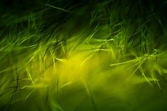 Abstrakt makro av päls i gröna signaler Royaltyfria Bilder