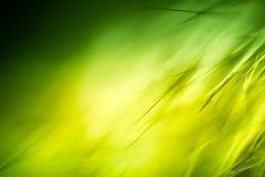 Abstrakt makro av päls i gröna signaler Fotografering för Bildbyråer