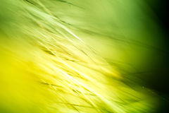 Abstrakt makro av päls i gröna signaler Arkivfoton