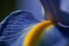 Abstrakt makro för lilor av en iris Arkivbilder