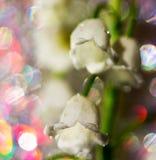 Abstrakt makrofoto av den vita blomman av liljekonvaljen Fotografering för Bildbyråer