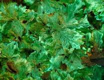 Abstrakt mineralisk textur Royaltyfri Fotografi