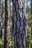 Abstrakt modell av trädskället Arkivfoton