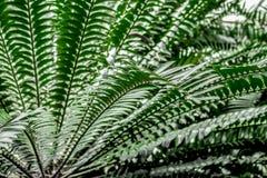 Abstrakt modell med grönt bladslut upp i växthus royaltyfria bilder