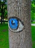 abstrakt modell på skället av ett träd Royaltyfri Bild