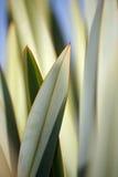 abstrakt modellväxt Royaltyfri Foto