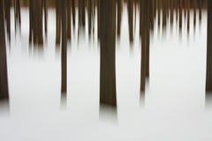 abstrakt montana treesvinter Arkivfoton