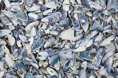 abstrakt mussellskal Arkivbild