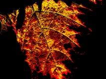 Abstrakt natur Arkivbilder