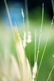 abstrakt natur Royaltyfria Bilder