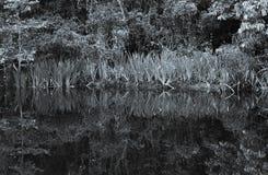 Abstrakt naturalny Fotografia Royalty Free