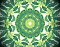 Abstrakt naturbakgrund för grön färg, tropisk gräsplan lämnar wi Arkivfoto