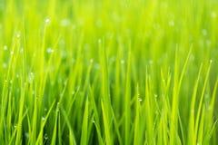 Abstrakt naturbakgrund med gräs och droppar Arkivfoto