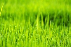 Abstrakt naturbakgrund med gräs och droppar Royaltyfri Bild