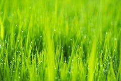 Abstrakt naturbakgrund med gräs och droppar Arkivbilder