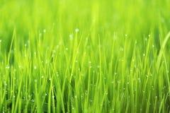 Abstrakt naturbakgrund med gräs och droppar Arkivbild