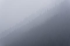 Abstrakt naturbakgrund, skuggor av grå färger Arkivfoto