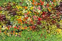 Abstrakt naturbakgrund, väggträdgård Fotografering för Bildbyråer