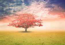 Abstrakt naturbakgrundsbegrepp Royaltyfria Bilder