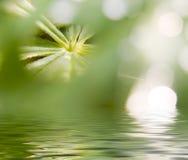 abstrakt naturbild Royaltyfria Foton