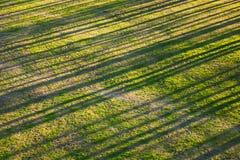 Abstrakt naturlig bakgrund med trädskuggor Royaltyfri Fotografi