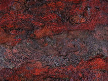 Abstrakt naturlig facture Royaltyfria Bilder