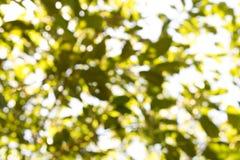 Abstrakt naturlig grön suddig bakgrund Bakgrund för design Arkivfoto