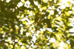 Abstrakt naturlig grön suddig bakgrund Bakgrund för design Royaltyfri Fotografi
