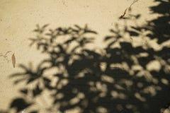 Abstrakt naturlig modell av stor trädskugga på ljus - brun mjuk sandyttersidaväg av tempeljordning med torkade sidor Arkivbild