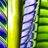 abstrakt naturligt Arkivfoto