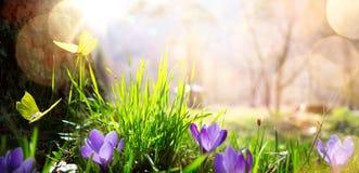 Abstrakt naturvårbakgrund; vårblomma och fjäril royaltyfri fotografi