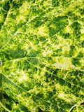 Abstrakt Nayural Green Royaltyfri Foto