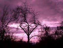 Abstrakt och härligt förälskelseträd royaltyfri fotografi
