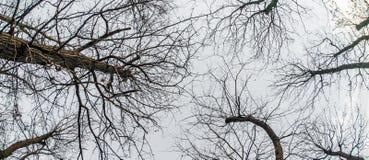 Abstrakt och konstnärlig fisheyesikt för konst, Skog- och trädfilial Arkivfoton