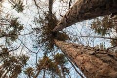 Abstrakt och konstnärlig fisheyesikt för konst, Skog- och trädfilial Arkivbilder