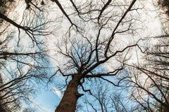 Abstrakt och konstnärlig fisheyesikt för konst, Skog- och trädfilial Royaltyfri Fotografi