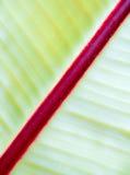 Abstrakt organisk texturbakgrund av ett blad Arkivfoton
