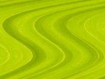 abstrakt organisk växttextur royaltyfria bilder