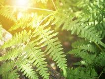 Abstrakt ormbunke i skogen Fotografering för Bildbyråer
