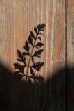Abstrakt ormbunkebladskugga på träväggen Arkivbilder