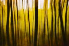 Abstrakt oskarp gul nedgångskog Arkivbilder