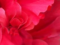 Abstrakt röd bakgrund för valentin- eller bröllopdag Royaltyfri Bild