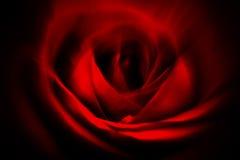 Abstrakt röd ros Arkivbild