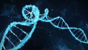 Abstrakt rörelsebakgrund - ögla för molekyl 4k för DNA för Digital binär polygonPlexus stock video