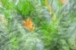 Abstrakt rörelsesuddighet, blomma & tjänstledigheter Royaltyfri Foto