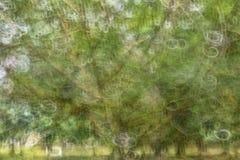 Abstrakt rörelsesuddighet, trädstam & tjänstledigheter, backgrou för gul gräsplan Royaltyfri Foto