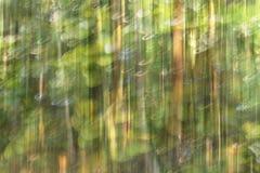 Abstrakt rörelsesuddighet, trädstam & tjänstledigheter, backgrou för gul gräsplan Royaltyfria Bilder